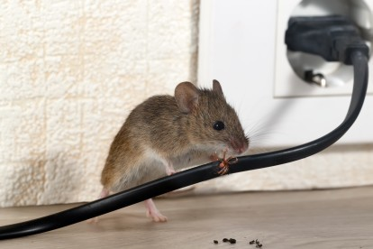 Pest Control in Thamesmead, SE28. Call Now! 020 8166 9746