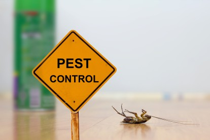Pest Contol in Thamesmead, SE28. Call Now 020 8166 9746