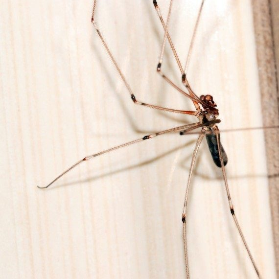 Spiders, Pest Control in Thamesmead, SE28. Call Now! 020 8166 9746