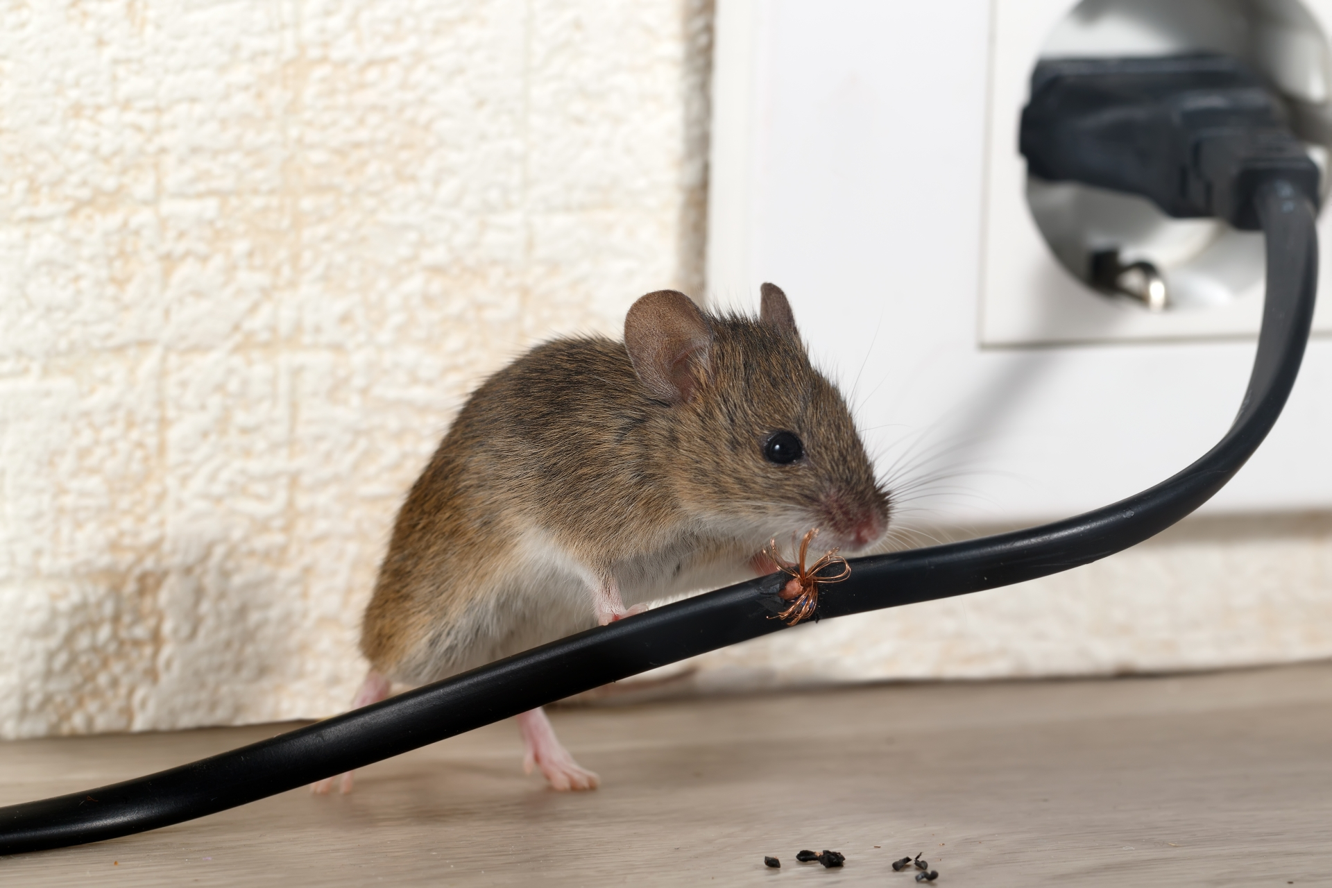 Mice Infestation, Pest Control in Thamesmead, SE28. Call Now 020 8166 9746